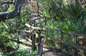 Hammock Nature Trail, Lori Wilson Park