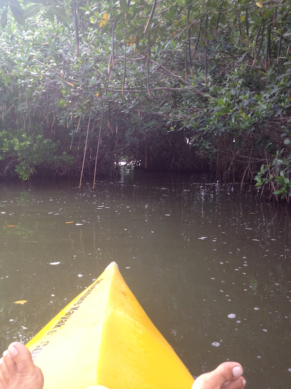 kayak cocoa beach mangroves