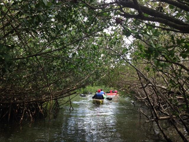 mangrove tunnels cocoa beach