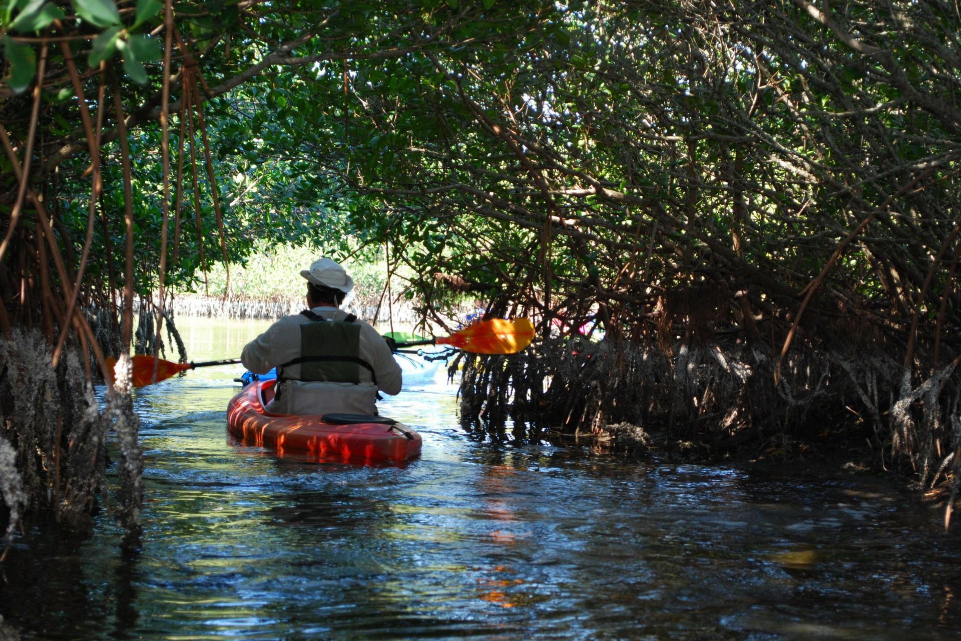 kayak mangrove tunnels