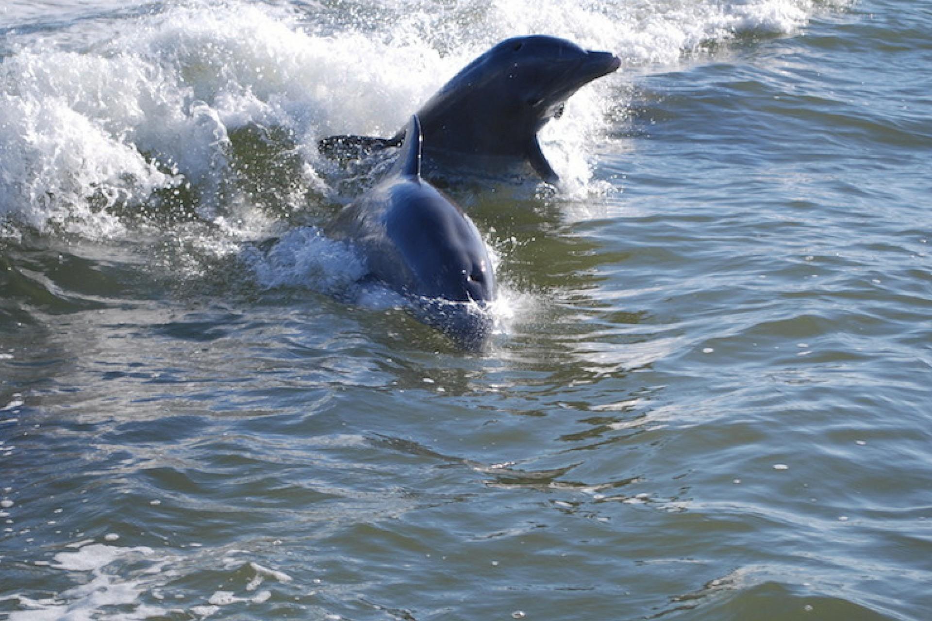 Kayak With Dolphin Cocoa Beach