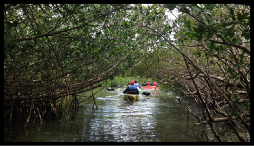 mangrove tunnels of cocoa beach