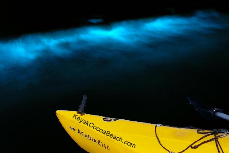 Bioluminescent Kayak Tours