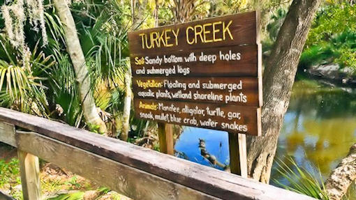 Kayaking Tours at Turkey Creek Sanctuary