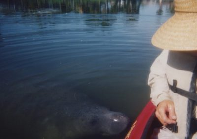 manatee_pushing_boat
