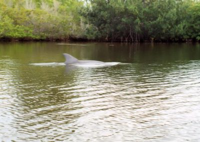Dolphin Sighting Near Cocoa Beach Flroida