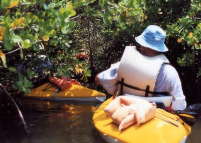Kayaking Tour In Mangroves
