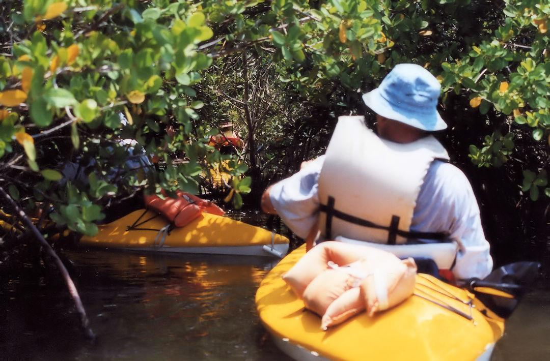 Kayaking Tour In Mangroves