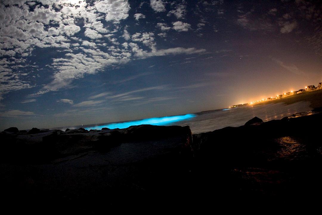 Bioluminescent Dinoflagellates