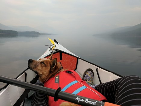 5 Tips for Kayaking With Your Pet