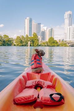 bulldog puppy sitting in a kayak