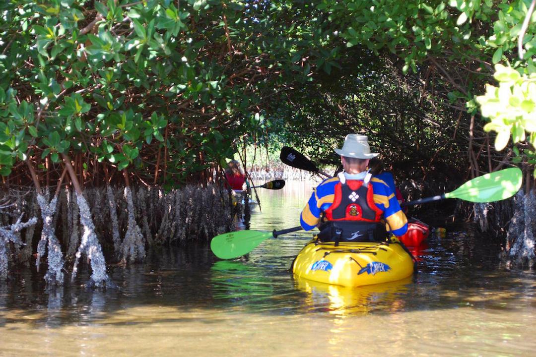 Kayaking in mangrove tunnels.